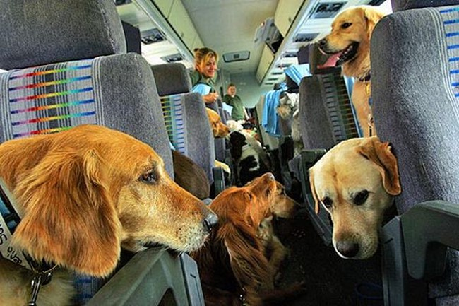 dogs inside bus