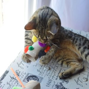 cat playing with cardboard tube toy